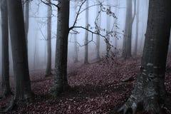 туманнейшая пуща пугающая Стоковое фото RF