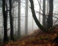 туманнейшая пуща Стоковое фото RF