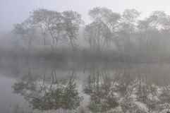 туманнейшая пуща Стоковая Фотография