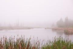 туманнейшее озеро Стоковые Изображения