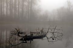 туманнейшее утро пущи загадочное Стоковое фото RF