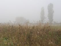 туманнейшее утро пшеница лета поля дня горячая Стоковая Фотография