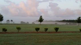 туманнейшее утро Стоковое Фото