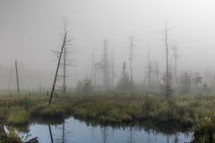 туманнейшее утро Стоковые Изображения