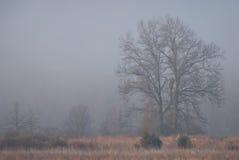 туманнейшие валы утра Стоковые Фото