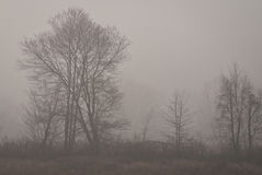 туманнейшие валы утра Стоковые Изображения