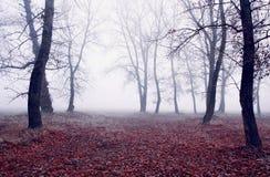 туманнейшие древесины Стоковые Фото