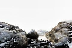 Туманнейший ландшафт зимы Стоковые Фото