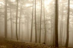туманнейший ландшафт пущи Стоковое фото RF