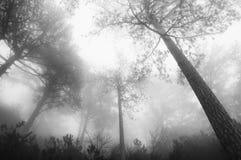 туманнейший ландшафт пущи Стоковое Изображение