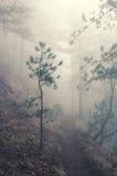 туманнейший ландшафт пущи Стоковые Фото