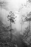 туманнейший ландшафт пущи Стоковые Фотографии RF