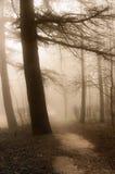 туманнейший ландшафт пущи Стоковые Изображения