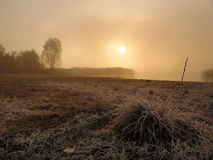 туманнейший восход солнца Стоковое Фото