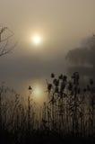 туманнейший восход солнца Стоковые Изображения RF