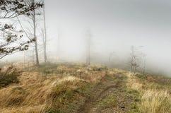 Туманнейший день Стоковая Фотография