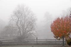 Туманнейший ландшафт Стоковая Фотография RF
