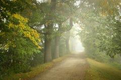 туманнейший путь Стоковая Фотография