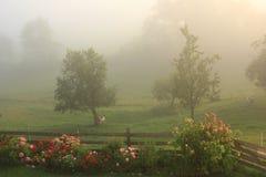туманнейший сад Стоковая Фотография