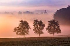 туманное лето утра стоковые фотографии rf