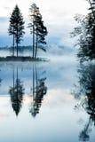 Туманное лето morning_vertical Стоковые Фотографии RF