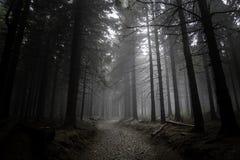Туманное и темное путешествие в лесе стоковые фотографии rf
