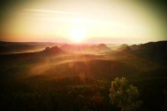 Туманное красочное утро Взгляд над деревом березы к глубокой долине вполне тяжелого ландшафта осени тумана после ненастной ночи стоковые фото