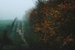Туманное поле с путем осени стоковое изображение rf
