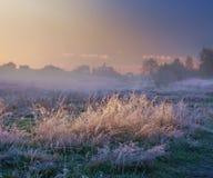 туманное река утра Стоковое Изображение
