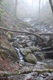 Туманное река Стоковая Фотография RF