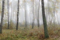 Туманное утро в древесинах осенью Утро, осень Стоковые Изображения RF