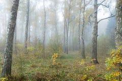 Туманное утро в древесинах осенью Утро, осень Стоковое Изображение RF