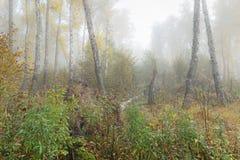 Туманное утро в древесинах осенью Утро, осень Стоковые Фото