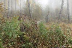 Туманное утро в древесинах осенью Утро, осень Стоковое Изображение