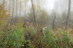 Туманное утро в древесинах осенью Утро, осень Стоковая Фотография RF