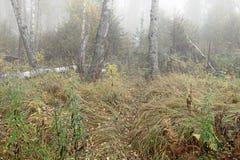Туманное утро в древесинах осенью Утро, осень Стоковая Фотография