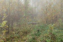Туманное утро в древесинах осенью Утро, осень Стоковые Фотографии RF