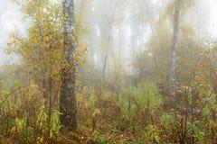 Туманное утро в древесинах осенью Утро, осень Стоковое Фото
