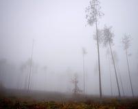 Туманное утро в лесе Стоковое Фото