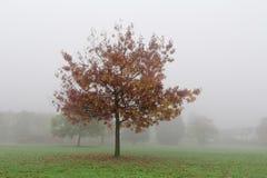 Туманное утро в парке города Франкфурта Стоковое Изображение RF