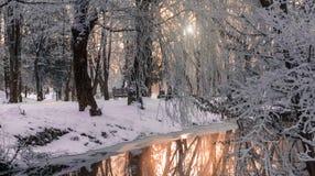 Туманное утро в парке города стоковые фотографии rf