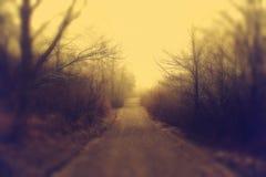 Туманное утро в парке стоковая фотография rf