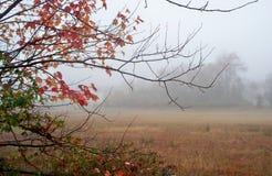 Туманное утро в падении Стоковая Фотография RF
