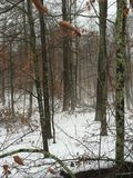 Туманное утро в древесинах Стоковое Изображение
