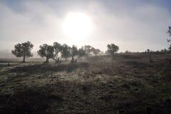 Туманное утро в Alentejo стоковое изображение