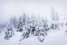 Туманное утро зимы в прикарпатских горах с снегом покрыло f Стоковые Изображения