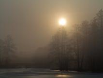 Туманное утро над мирным прудом стоковые фотографии rf