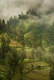 Туманное утро на наклонах вулкана Bromo, Ява, Индонезия Стоковые Изображения RF