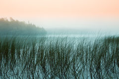 Туманное утро на озере стоковое изображение rf