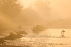 Туманное утро над озером Стоковое Фото